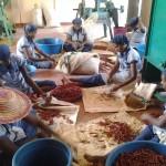 Projekt Mini-Fabrik bærer frugt – 50 enkemødre holdes beskæftiget
